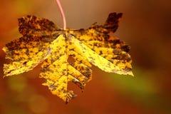 Rostige Urlaubnahaufnahme des Herbstes Lizenzfreie Stockfotos