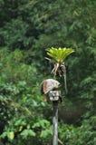 Rostiger Überwachungsscheinwerfer versteckt im Dschungel mit einer Anlage g stockfoto