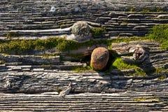 Rostiger Nagel im moosigen faulen Holz Stockbild