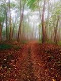 Rostiger Wald Stockfotos