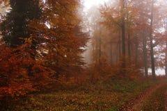rostiger Wald am nebeligen Morgen des Herbstes Lizenzfreie Stockfotos