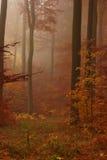 rostiger Wald am nebeligen Morgen des Herbstes Stockfotografie