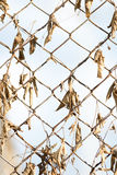 Rostiger Zaun mit trockenen Blättern Stockfotografie