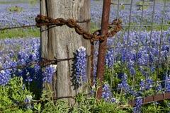 Rostiger Zaun und Bluebonnets Stockfotos