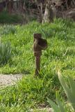 Rostiges Rohr im Garten Stockfoto