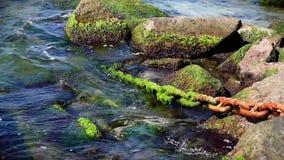 Rostigt chain bevuxet med den gröna algen klibbar ut ur havet lager videofilmer