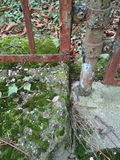 Rostigt staket med mossa Arkivbilder