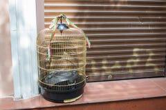 Rostov On Don, Россия - 18-ое мая 2018: Портативный аудиоплейер в клетке птицы на улице, как воробьинообразная птица в клетке Ори Стоковые Изображения RF