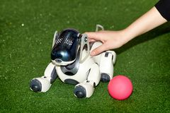 Dog AIBO robot with a ball at the exhibition royalty free stock photography