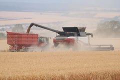 Rostselmash kombinieren dreschenden Weizen in Deutschland stockbild