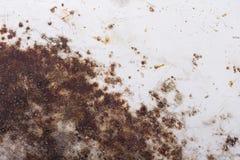 Rosttextur för bakgrund, Royaltyfria Foton