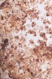 Rosttextur för bakgrund Arkivfoto