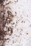 Rosttextur för bakgrund Royaltyfri Fotografi