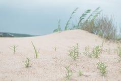 Rostuschieinstallatie in het zand stock foto