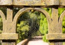Rosy błyszczenia pajęczyna na bramie Obrazy Stock