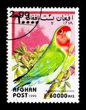 Rosy-collared Lovebird (Agapornis roseicollis), serie, circa 199. MOSCOW, RUSSIA - DECEMBER 21, 2017: A stamp printed in Afghanistan shows Rosy-collared Lovebird Stock Photos