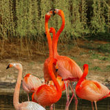 Rosy flamingo at the spring lake Stock Images
