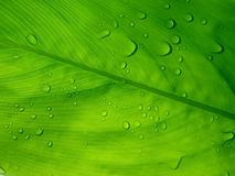 rosy kropel zielony liść Zdjęcia Royalty Free