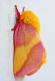 Rosy Maple Moth Royalty Free Stock Photography