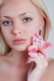 Rosy orchid Stock Image