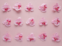 Rosy orchid flowers pattern on pink background. Stock Photo