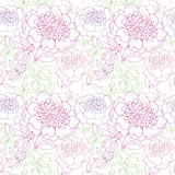 Rosy peony floral sketch. spring flower Stock Image