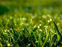 rosy popołudniowy trawy pastwiska późno naturalne Zdjęcia Stock