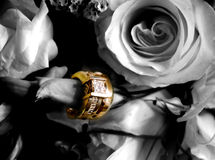 Rosy Rings. Wedding bands on roses Stock Photography