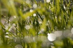 rosy trawa Zdjęcie Stock