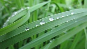 Rosy trawy natury ranku mgły świeżość fotografia royalty free