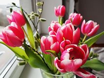 Rosy Tulips in een glasvaas stock foto's