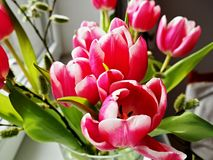 Rosy Tulips in einem Glasvase Stockbilder