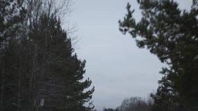 Rosyjska lasowa droga zdjęcie wideo