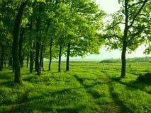 Rosyjska wieś w zieleni zdjęcia royalty free