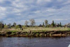 Rosyjska wioska blisko rzeki Zdjęcie Royalty Free