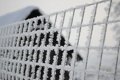 Rosyjska zima 6 Fotografia Stock