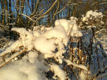 Rosyjska zima, zima las, zima dzień w lesie, krajobraz, drzewa w śniegu na zewnątrz miasta na polowaniu, Zdjęcia Stock