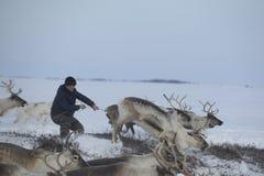 Rosyjski Arktyczny aborygen! Zdjęcie Royalty Free