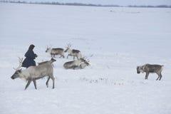 Rosyjski Arktyczny aborygen! Zdjęcia Royalty Free