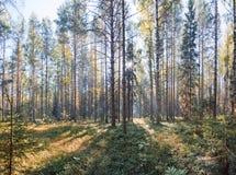 Rosyjski Północny park narodowy Zdjęcie Royalty Free
