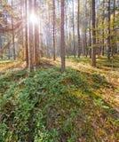 Rosyjski Północny park narodowy fotografia royalty free