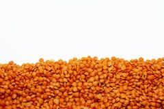 Rosyp frais orange de lentilles d'isolement sur le fond blanc Photos stock