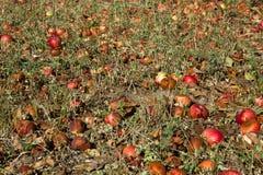 Rot appelengebied Royalty-vrije Stock Afbeeldingen