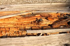 Rot on dead wood stock images
