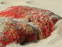 Rot färbte Felsen auf dem Strand, der mit Sand bedeckt wurde Stockbilder