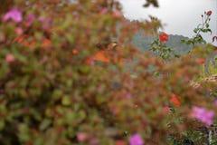 Rot in Farben von Eden stockbild