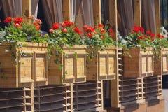 Rot fliegt in Holzkisten eines Straßencafés Lizenzfreie Stockbilder