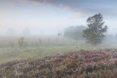 Rot gebrannte Heide durch Suppengrün auf Hügel stockbilder