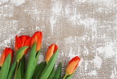 Rot-gelbe Tulpen auf einem hellen Hintergrund Frühling - Plakat mit Raum des freien Texts Lizenzfreie Stockfotografie