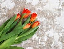 Rot-gelbe Tulpen auf einem hellen Hintergrund Frühling - Plakat mit Raum des freien Texts Stockbild